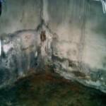 Как устранить сырость в подвале вашего дома