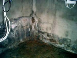 Вид подвала частного дома пораженного плесенью