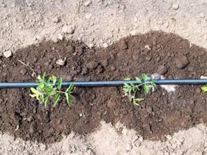 Местный полив растений