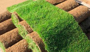 Как должен выглядеть свежий газон