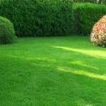 Сеяный газон своими руками