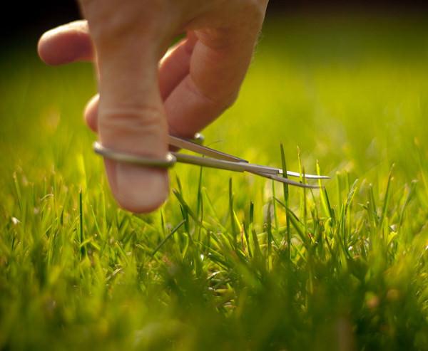 Первая стрижка газона после посадки травы