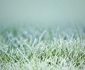 Травинки под снегом