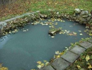 Осенние листья в бассейне