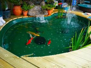 Бассейн с золотыми рыбками